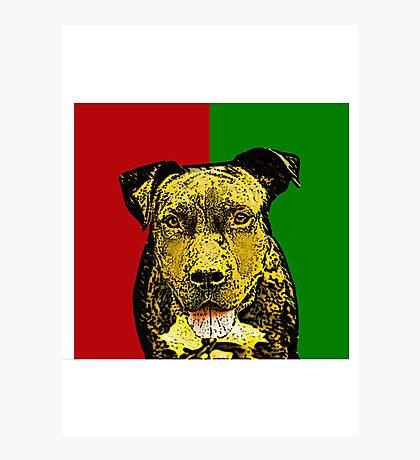 I Love Pitbulls, White Font Photographic Print