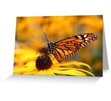 Fauna - Monarch butterfly Greeting Card