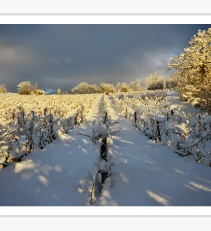 Snow and sun on the french vineyard Sticker