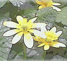 Buttercups by OlaG