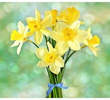 March Daffodils Photographic Print