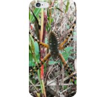 02 Black and Yellow Argiope Spider iPhone Case/Skin