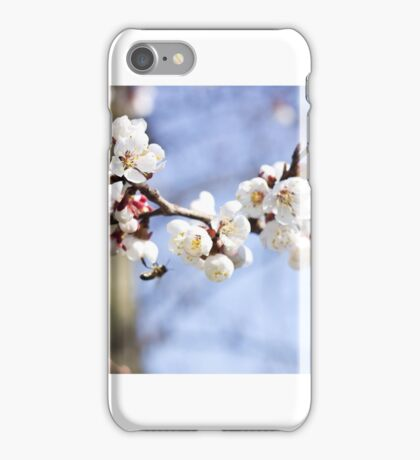Spring cherry blossom iPhone Case/Skin