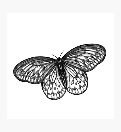 Butterfly in B&W Photographic Print