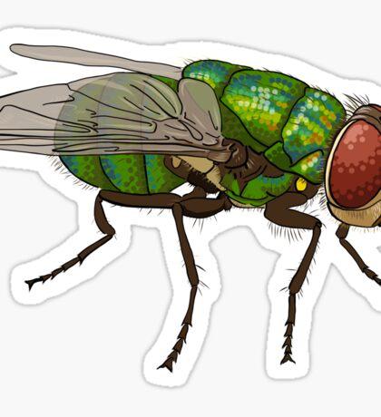 Chrysomya megacephala blowfly Sticker