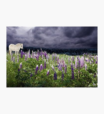 A Childs Dream Among Lupine Photographic Print