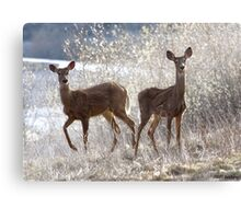 White-tailed Deers Canvas Print