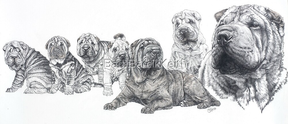 Growing Up Shar-Pei by BarbBarcikKeith