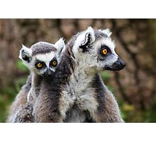 Lemurs - Mother and baby Photographic Print