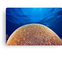 Brain coral or death star? Canvas Print