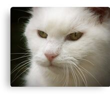 GOOD LOOKING ...  Canvas Print