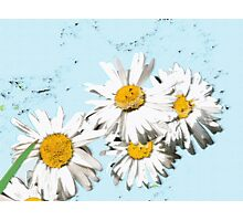 DAISIES on blue Photographic Print