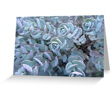 Pastel Succulent Greeting Card