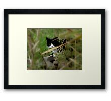 I Spy with my little eye something beginning with 'D' Framed Print