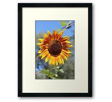 My Neighbor's Sunflower 2 Framed Print
