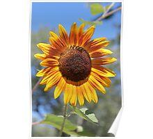 My Neighbor's Sunflower 2 Poster