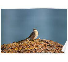Birds of Port Elliot Poster