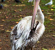 Pelican 2 by Ellesscee
