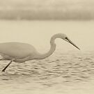 Egret hunting by ThisMoment
