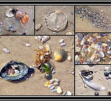 Seashell Montage - Island Beach State Park - NJ - USA by MotherNature2