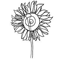 One Line - Sunflower Photographic Print