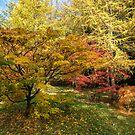 Autumn Sunshine  by Rob Hawkins
