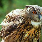 Owl Eagle II by loiteke