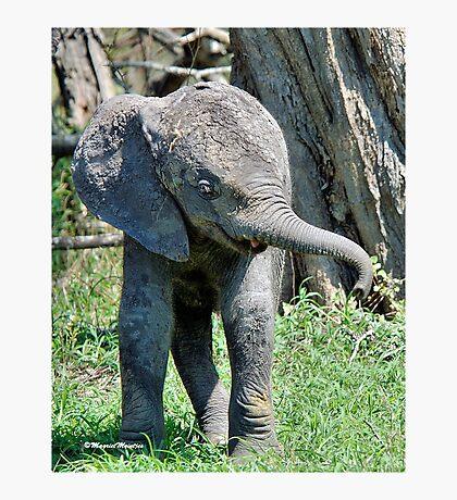 YES I'M DOING THE BABY ELEPHANT WALK - THE AFRICAN ELEPHANT – Loxodonta Africana Photographic Print