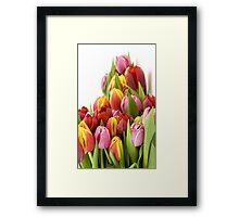 Beautiful Tulip Flowers Framed Print