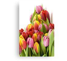 Beautiful Tulip Flowers Canvas Print