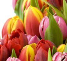Beautiful Tulip Flowers Sticker