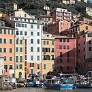 Camogli's Harbour  by Alessandra Antonini