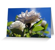 Sunshine, Roses and Morning Happiness Greeting Card