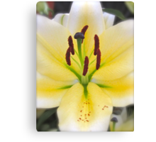 YELLOW LILY MACRO Canvas Print