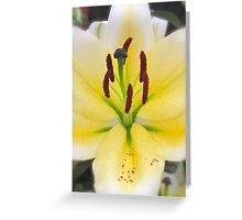 YELLOW LILY MACRO Greeting Card