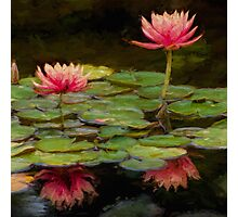 Impressions of pink lilies Photographic Print