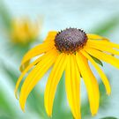 Yellow Daisy by Colleen Drew