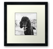 Dogs with game face on .23 Framed Print