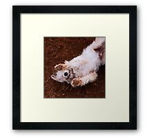 Dogs with game face on .21 Framed Print