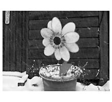 Flowers in the Snowstorm Photographic Print