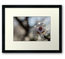 Blossoms in Bloom Framed Print