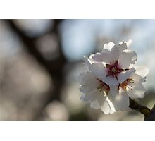 Blossoms in Bloom Photographic Print