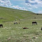 Wild Horses in Montana by AnnDixon