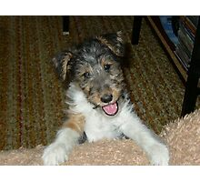 WFT puppy cute Photographic Print