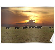Going Home - A Serengeti Sunset, Tanzania Poster