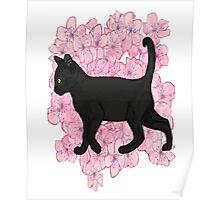 Black cat , cherry blossoms  Poster
