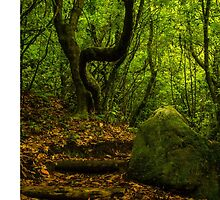 Wild Forest - Nature Photography by JuliaRokicka