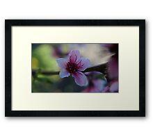 Blossom - Macro Framed Print
