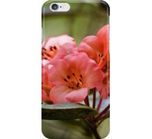 Rhododendron in full bloom iPhone Case/Skin