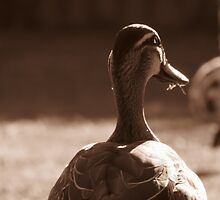 Duck closeup - Sepia colour by JDPH0T0GRAPHY
